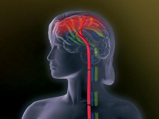 Duloxetin – wirksam bei Depression und Schmerz: Rasche Rückkehr ins Arbeits- und Alltagsleben durch erfolgreiche Behandlung psychischer sowie körperlich-schmerzhafter Symptome