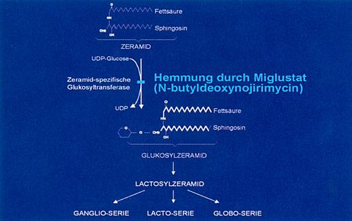 Prof. Dr. med. Michael Beck: Lyosomale Speicherkrankheiten – Neue Therapieoptionen: Falldemonstrationen