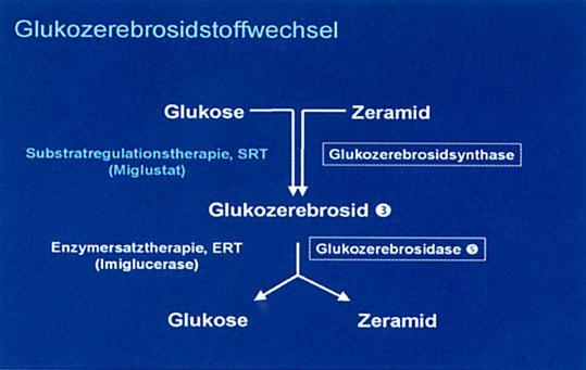 Prof. Dr. med. S. vom Dahl: Lysosomale Speicherkrankheiten – Eine Einführung