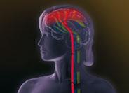 Körperlich-schmerzhafte Symptome bei Depression und Generalisierter Angststörung
