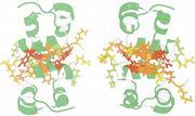 Auf dem Weg zum Proteindesign