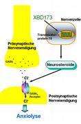 Neuer Wirkmechanismus für Medikamente gegen Angsterkrankungen identifiziert