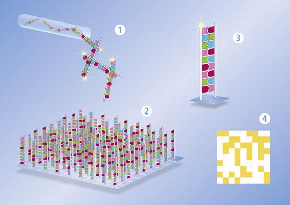 Neues Untersuchungsmodell zur lokalen Wundtherapie: Dexpanthenol aktiviert wichtige Gene