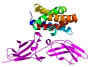 Biomarker ermöglicht Prognose über Verlauf der rheumatoiden Arthritis