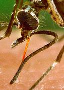 Achtung: Mücken fliegen auf Füße!