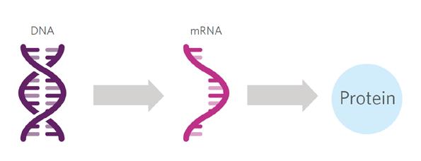 RNA-Interferenz: Ein Paradigmenwechsel in der Therapie von schwerwiegenden Erkrankungen