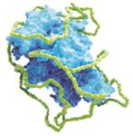 Individualisierte Hämophilie A-Therapie: Starke Perspektiven für die Hämophilie A-Therapie mit Jivi®