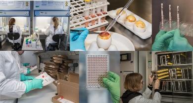 Robert Koch-Institut: Die Grippewelle hat begonnen