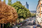 Straßenbäume als Mittel gegen Depressionen