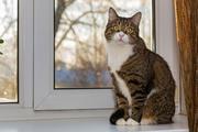 In Corona-Quarantäne nicht mit der Katze schmusen